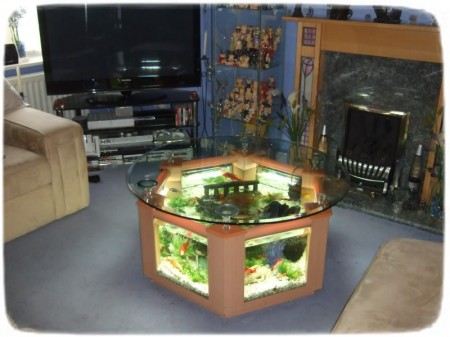 Cool Fish Tanks Designs