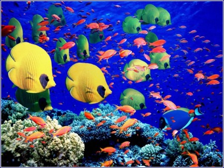 Coral Reef Fish Pictures And Names