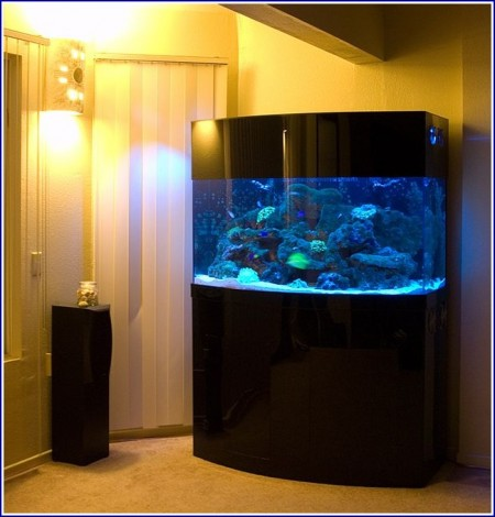 Custom Fish Tanks Ohio