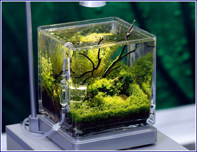 Custom Fish Tanks Uk