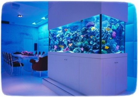 Custom Saltwater Fish Tanks