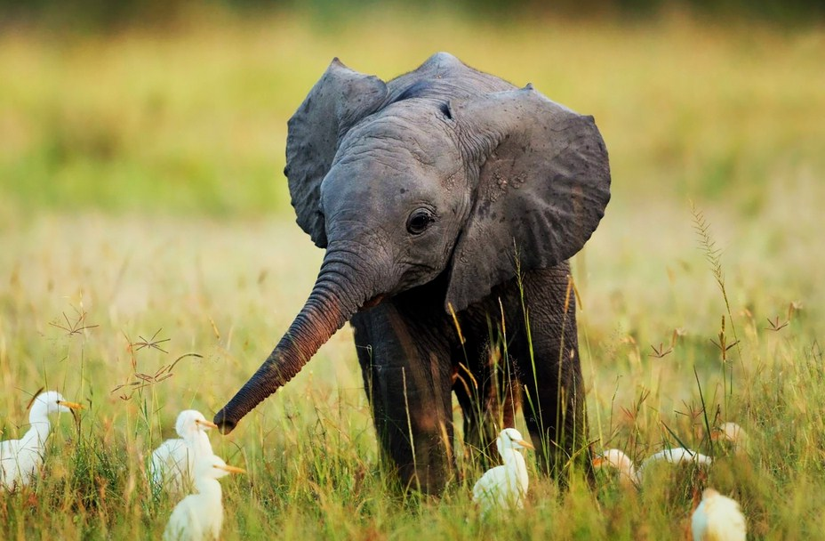 Cute Baby Elephants Pictures