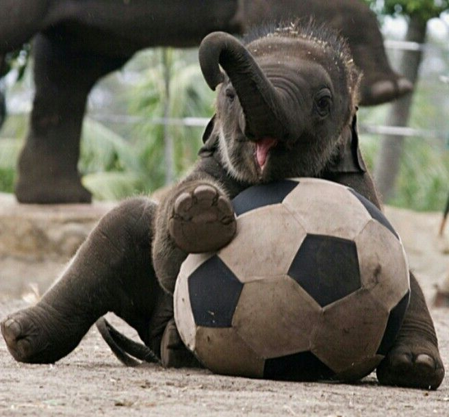 Cute Baby Elephants Playing