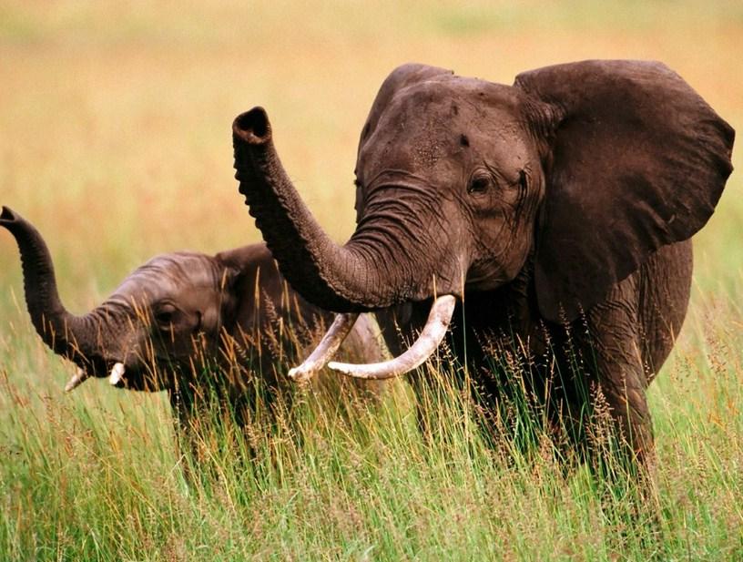 Cute Baby Elephants Tumblr