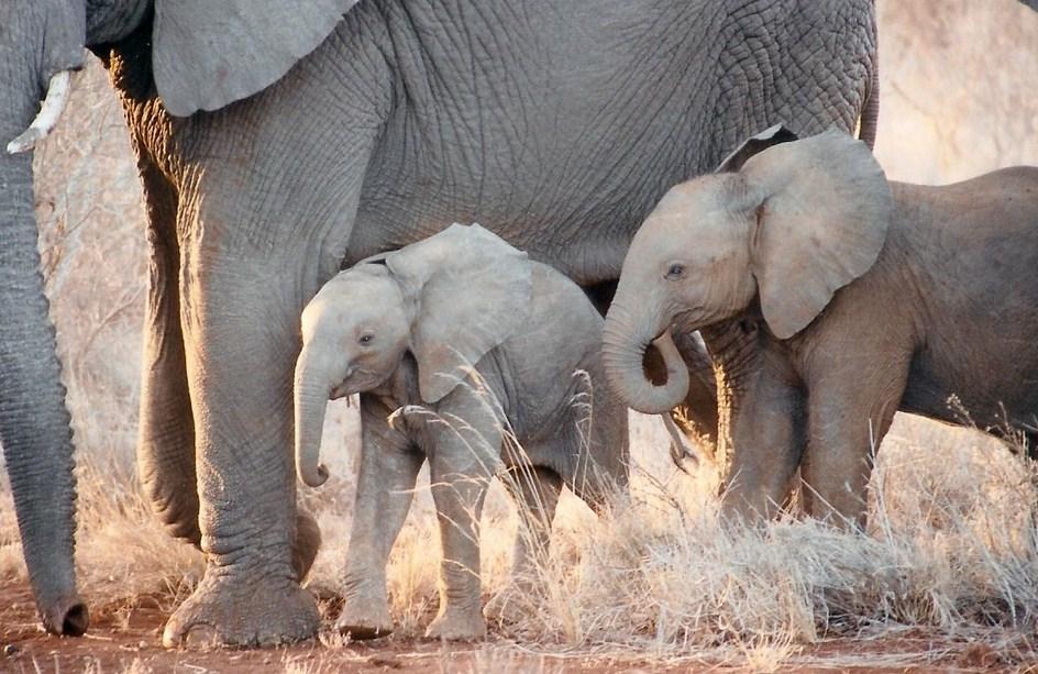 Cute Baby Elephants Wallpaper