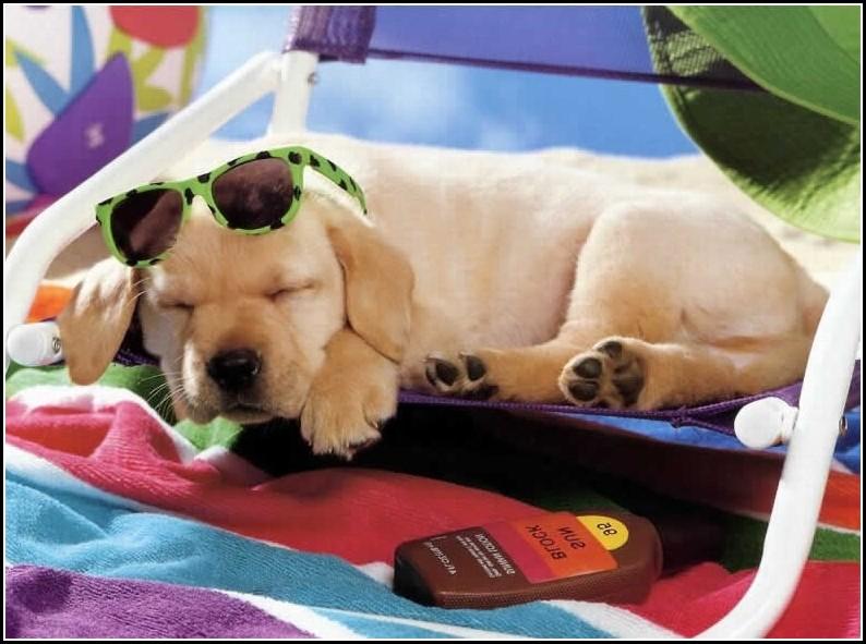 Cute Dog Photos Funny