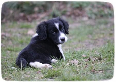 Cute Pet Photo Contest