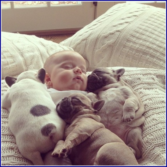 Cute Pictures Of Dogs And Babies