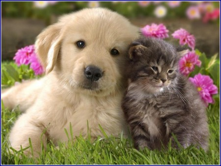 Cute Pictures Of Dogs And Cats