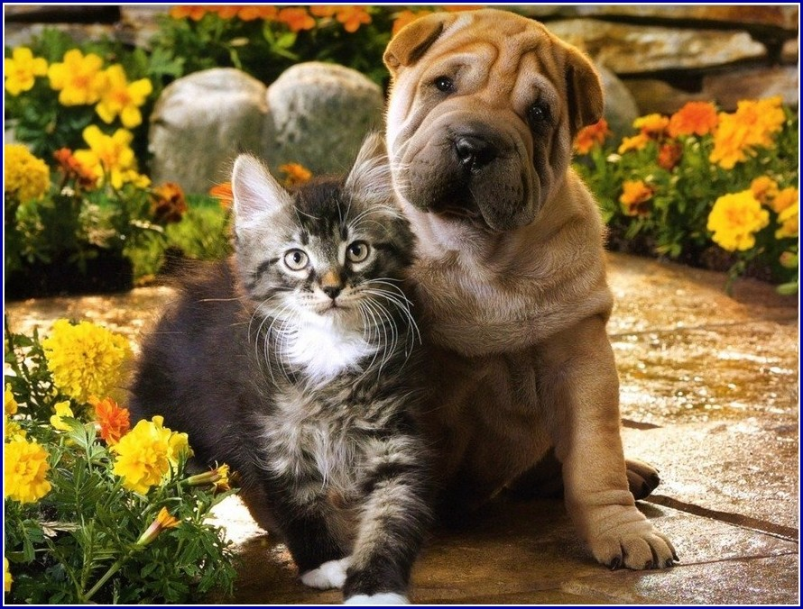 Cute Pictures Of Dogs And Cats Together