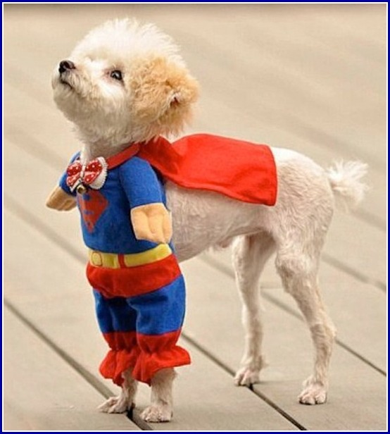 Cute Pictures Of Dogs In Costumes