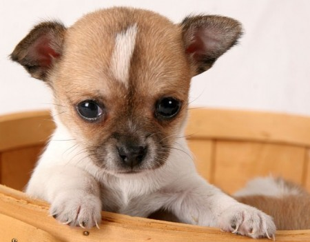 Cute Small Dog Breeds List With Pictures