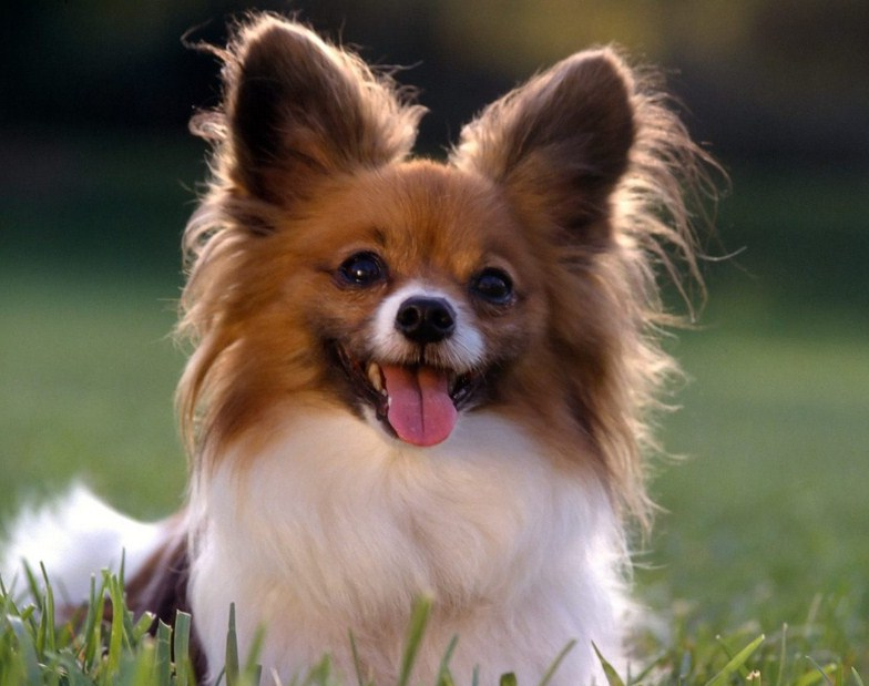 Cute Small Dog Breeds List