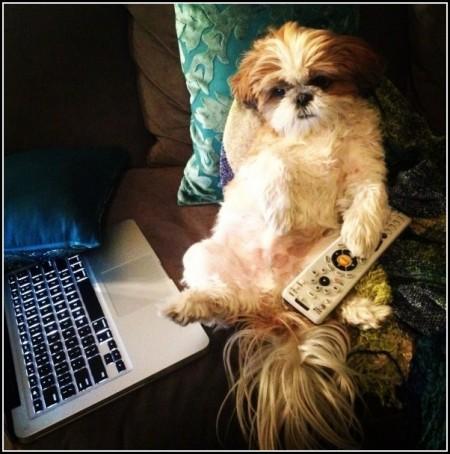 Cutest Dog Contest 2014