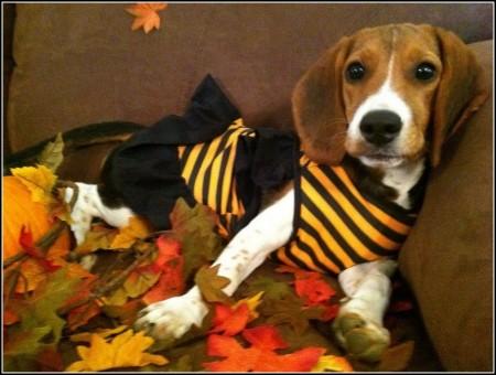 Cutest Dog Contest Petsmart