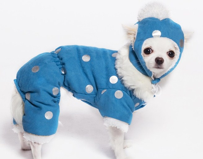 Designer Dog Clothes And Accessories