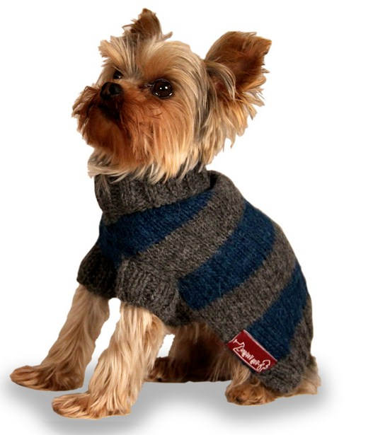 Designer Dog Clothes Nyc