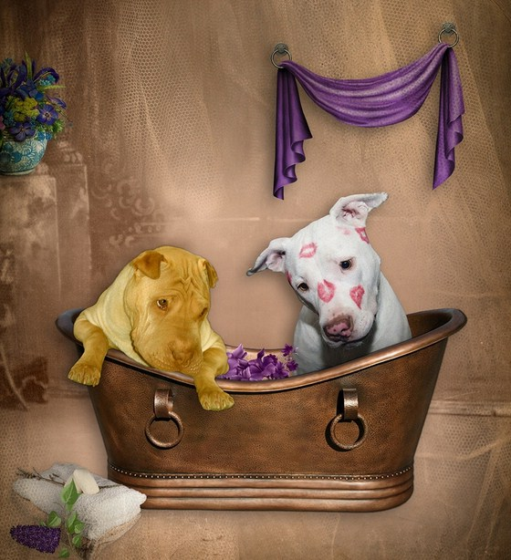 Diy Dog Bath Tub
