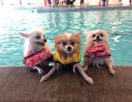 Dog Life Jackets Petsmart