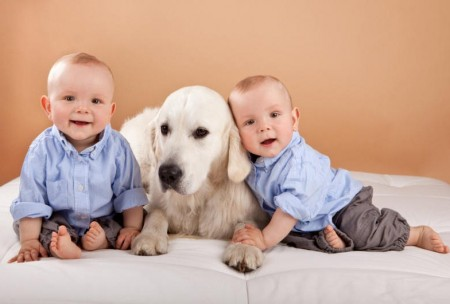 Dogs For People With Allergies And Kids