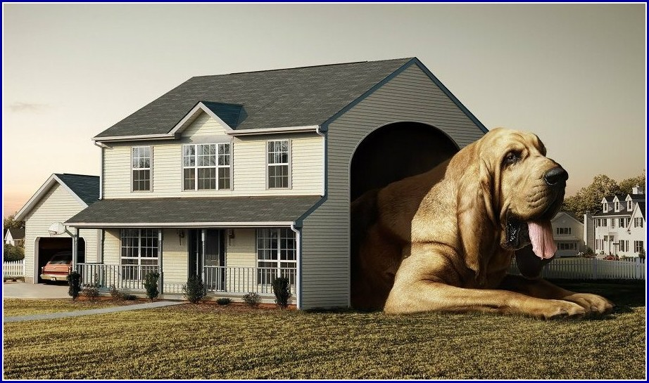 Extra Large Dog Houses For Great Danes