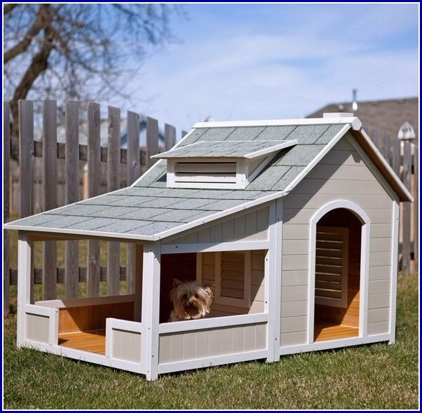 Extra Large Dog Houses Two Dogs