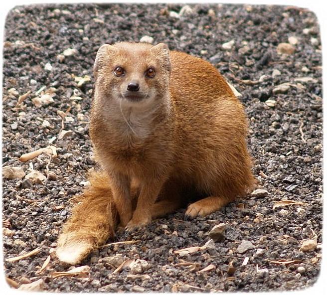 Ferrets As Pets Wiki