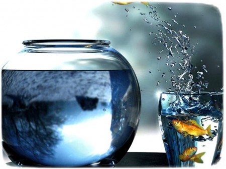 Fish Out Of Water Images