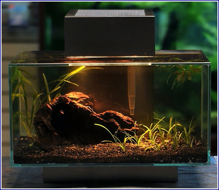 Fish Tank Accessories India