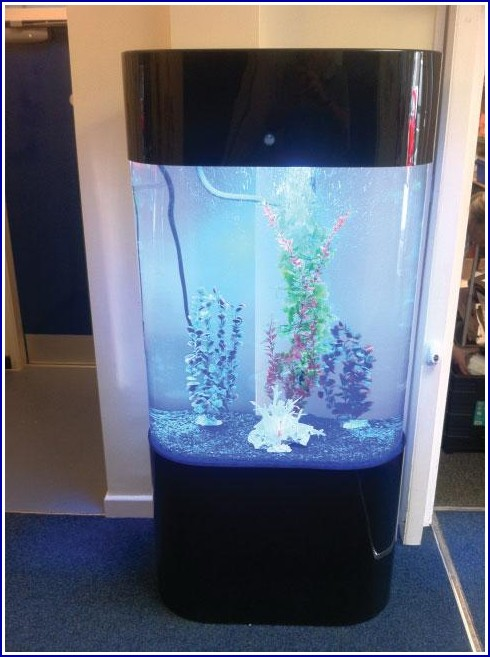 Fish Tank Accessories Uk