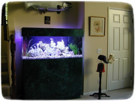 Fish Tank Stand Ideas