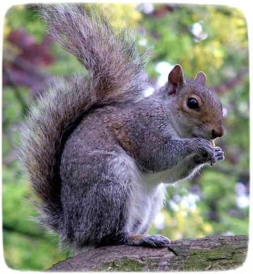 Flying Squirrel Pet Uk