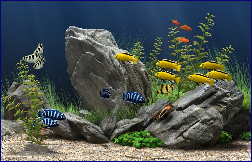 Freshwater Fish Tank Backgrounds