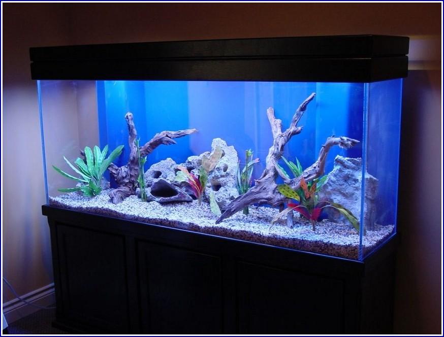 Freshwater Fish Tank Design