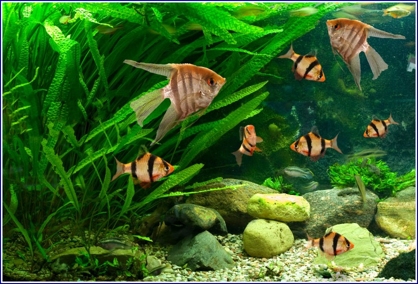 Freshwater Fish Tank With Sand
