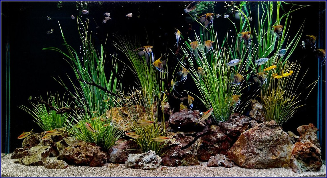 Freshwater Fish Tanks Ideas