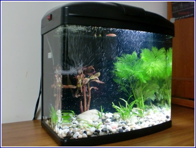 Freshwater Fish Tanks Pictures