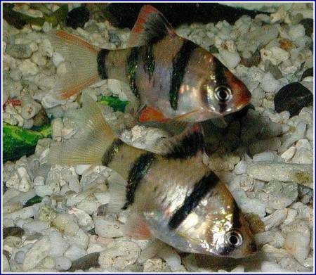 Freshwater Tropical Fish Images