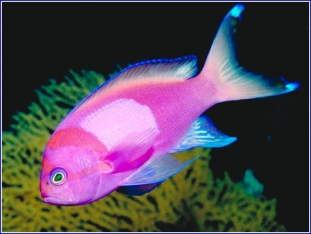 Freshwater Tropical Fish Photos