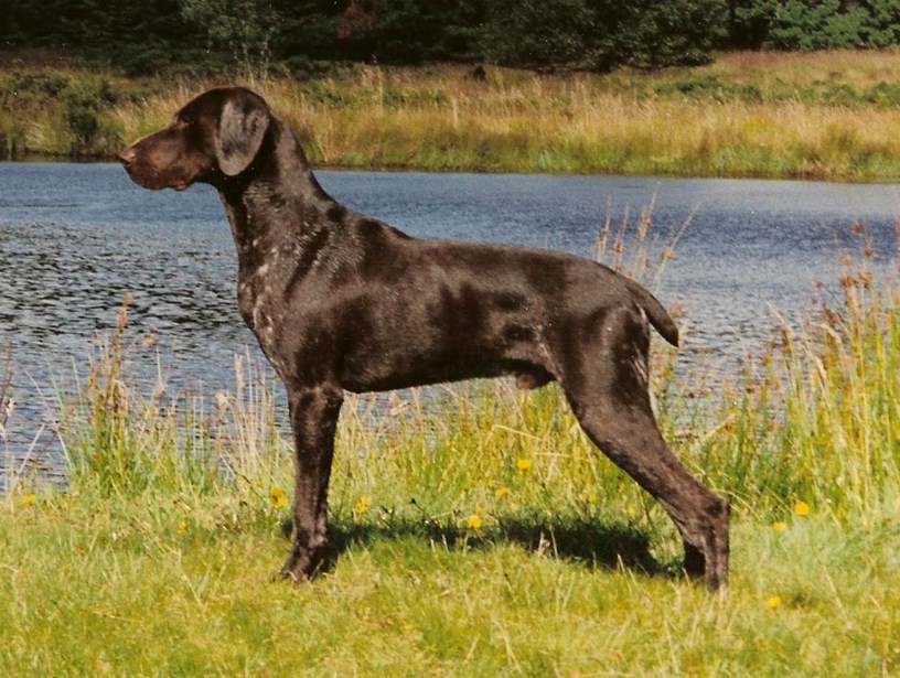German Dog Breeds Pictures