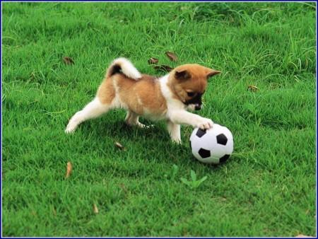 Good Medium Sized Dogs For Children