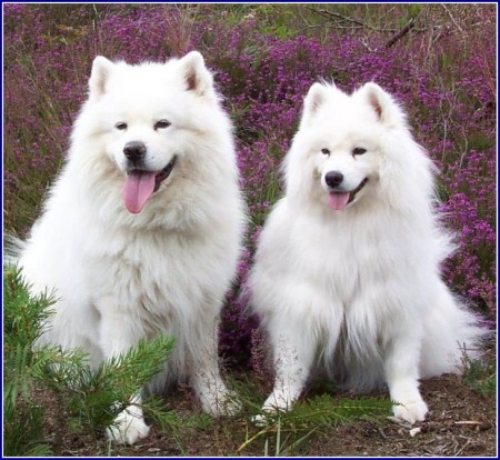 Great Family Dogs That Are Medium Sized
