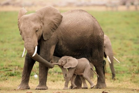 Images Of Elephants And Their Babies