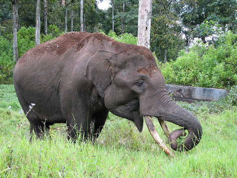 Images Of Elephants Eating