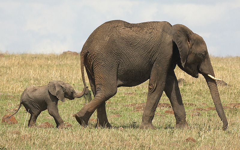 Images Of Elephants For Kids
