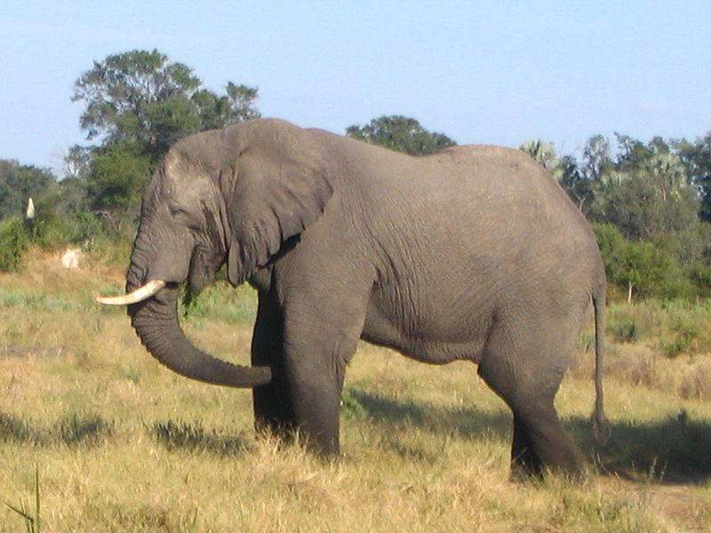 Images Of Elephants In Africa