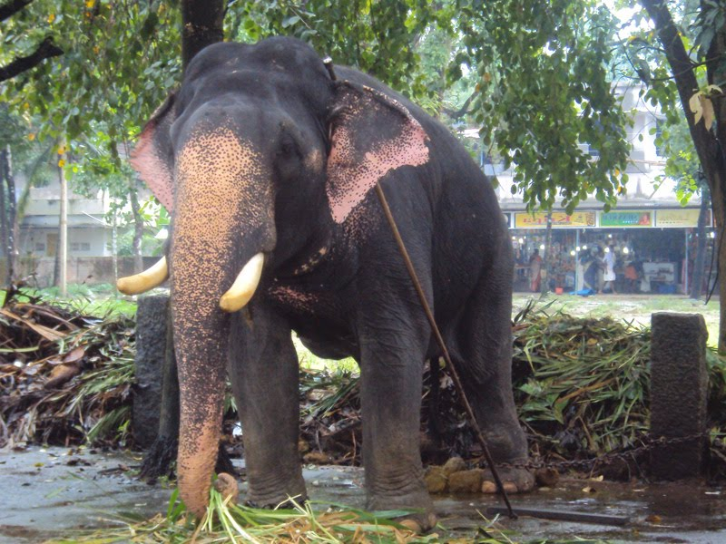 Images Of Elephants In Kerala
