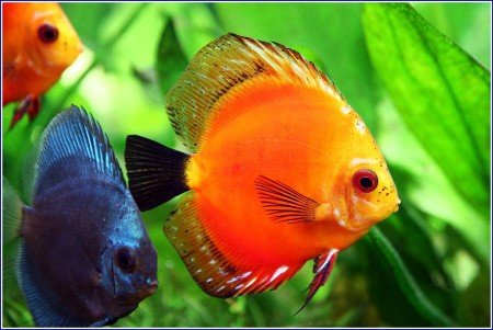 Images Of Fish Aquarium