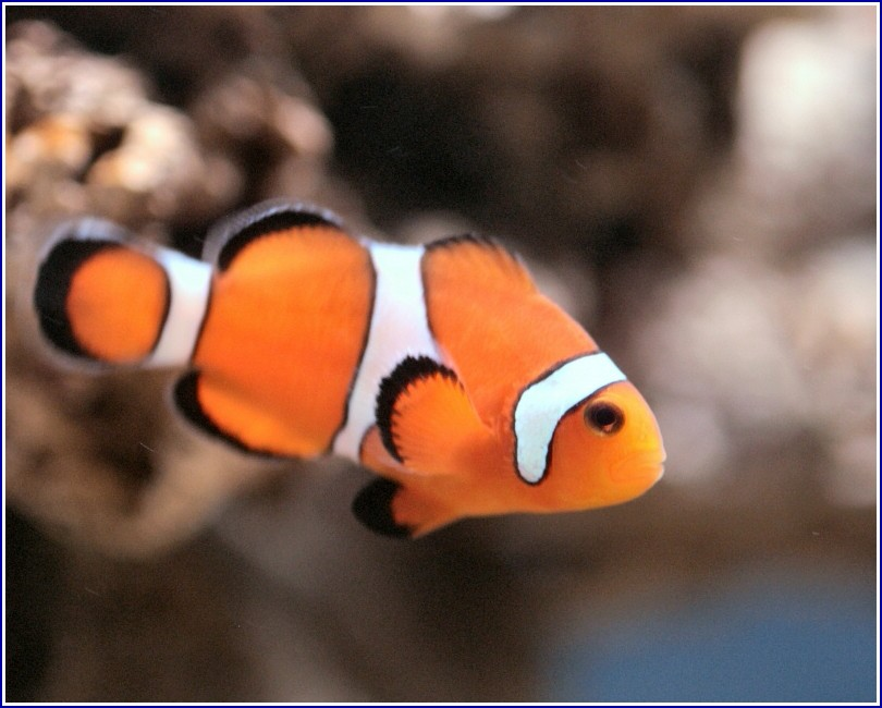 Images Of Fish In Water