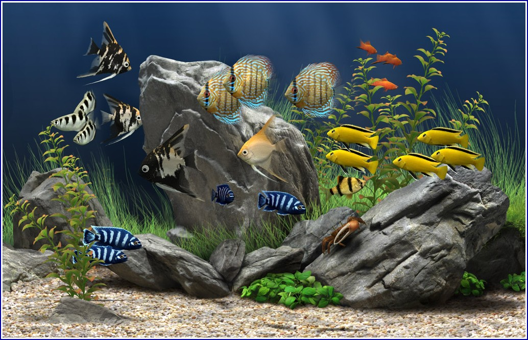 Images Of Fish Tanks